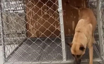 钢丝网焊接的狗笼都关不住狗狗?