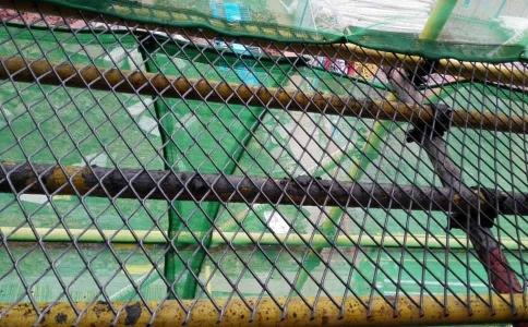 菱形钢笆网片中建公司案例